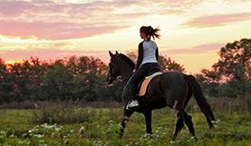 Equitazione Calabria
